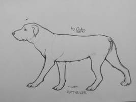 Rottweiler Sketch by Tigusia