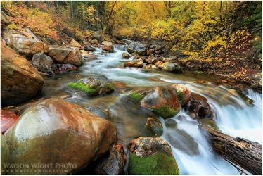 The Clarity of Autumn by tourofnature