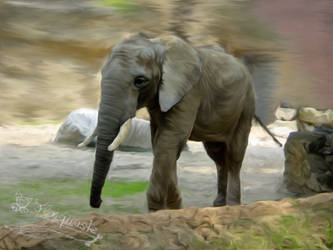 Elephant by Flohquaste