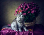 My favorite bush of chrysanthemums blossomed by Daykiney
