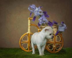 Little puppy by Daykiney