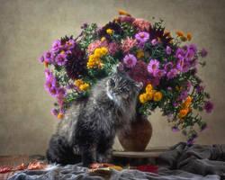 Autumn cat Mason by Daykiney