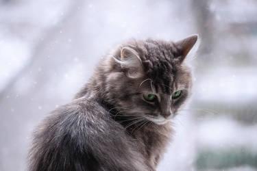 Masyanya ander the snow by Daykiney