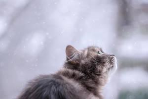 It is snow in by Daykiney
