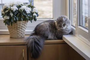 Shy Kitty by Daykiney