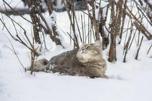 Snow walk by Daykiney