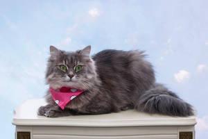 Portrait of a pretty kitty by Daykiney