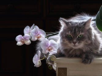 You will not take photos of orchids without me! by Daykiney