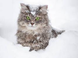 Snowy portrait of Masyanya by Daykiney