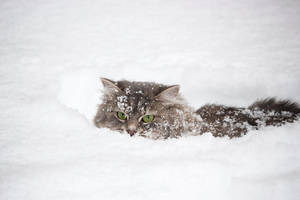 Masyanya hid in the snow by Daykiney