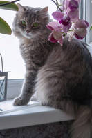 Masyanya on the windowsill among orchids by Daykiney