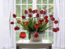 Red tulips in the white interior by Daykiney