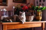 Small mistress of big kitchen by Daykiney