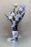 Blue irises by Daykiney