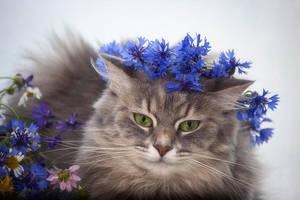 Masyanya in the cornflowers by Daykiney