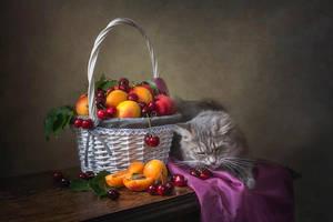 Hungry kitty by Daykiney