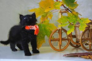 Little curious kitten by Daykiney
