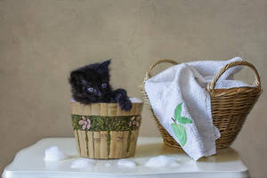 Trying to wash a black kitten by Daykiney