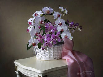 Still life with orchid's basket by Daykiney
