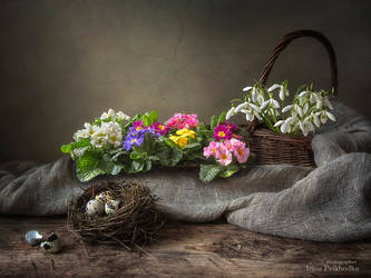 Still life with a spring mood by Daykiney