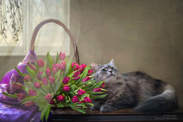 Masyanya is posing with bouquet of magenta tulips by Daykiney