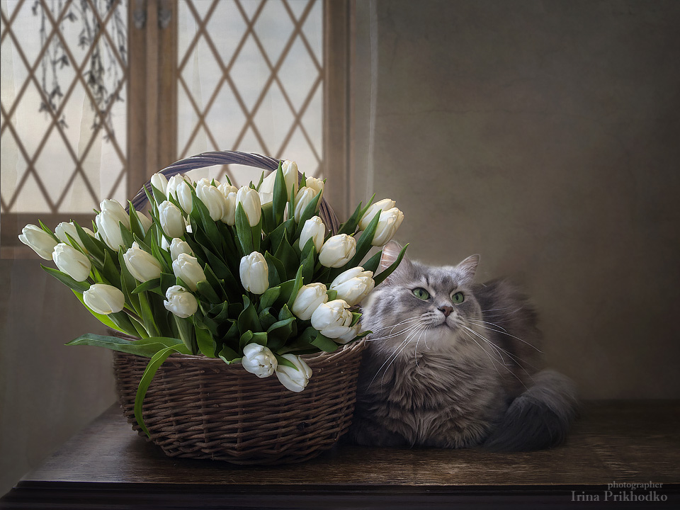Fluffy model by Daykiney
