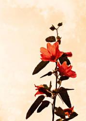 Bloom by EmilyBrandDesigns