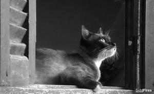Gato na janela by siddpires
