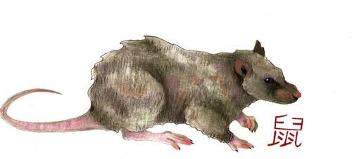 Rat by eden-paradox