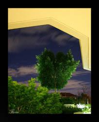 Dream Tree by Thoran