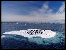 adelie penguins by italo