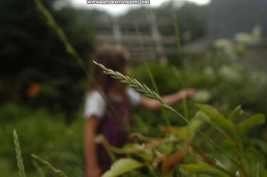 grass and a girl by sselfless