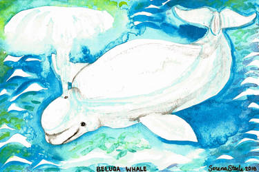 Beluga Whale 2 by ghostyheart
