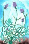 Lavender by ghostyheart