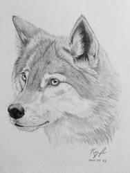Wolf by Suzuka26