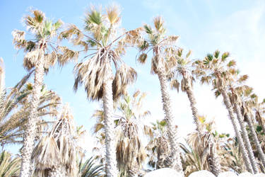 Just some palms by blackberry08us