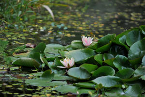 Pond by Spedding-Stock