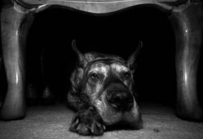 A Tired, Old Dog by coulombic