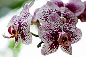 Orchid flowers 9 by a6-k