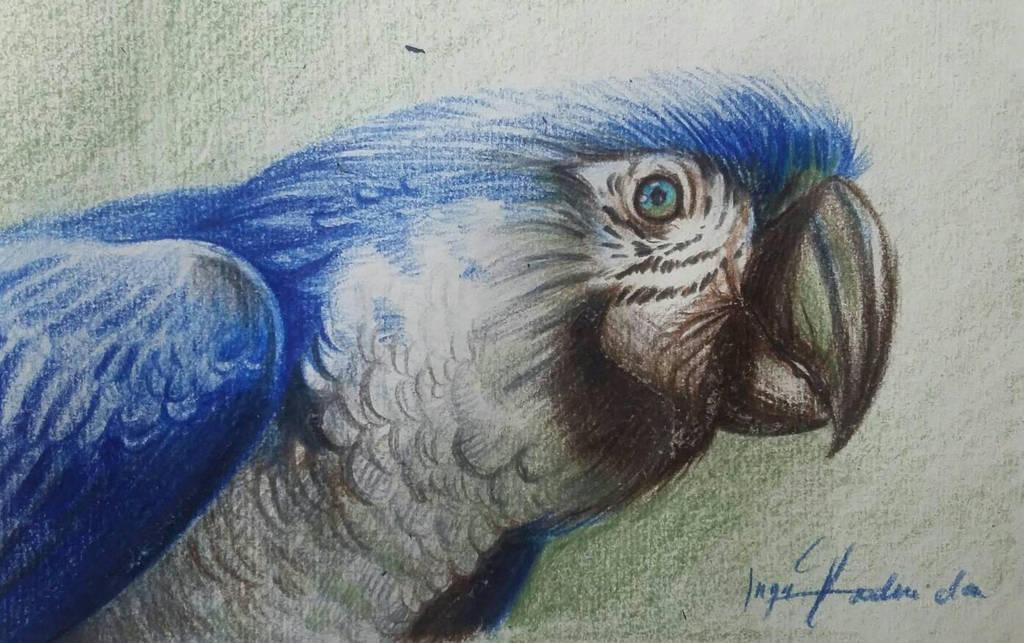 Macaw ( Niebieska papuga) by YoungLadyArt