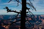 Grand Canyon V by jamezevanz