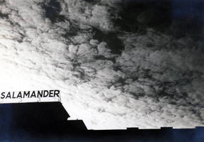 SALAMANDER by KizukiTamura