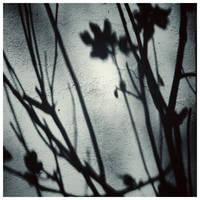shadows on the wall by KizukiTamura