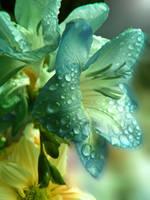 Raindrops by Ph0t0-girl