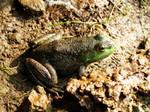 Frog under step by Rhumald