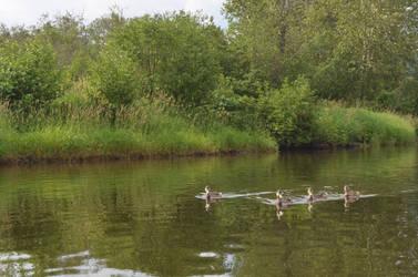 More Ducks by Rhumald