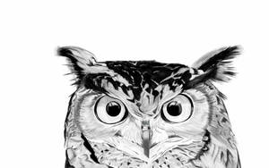 owl by Brownie-frito