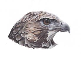 Hawk painting by MeEmilee