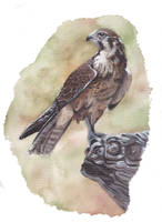 Brown Falcon Painting by MeEmilee