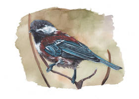 Young chestnut-backed chickadee painting by MeEmilee